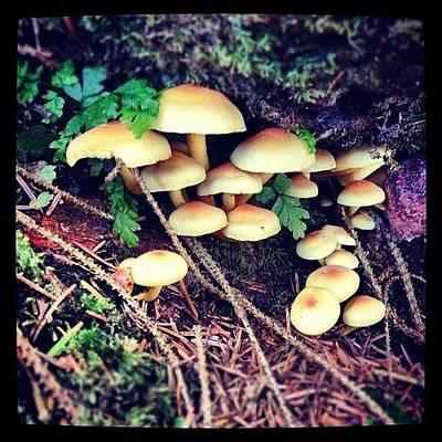 Woodland Wall Art - Photograph - #mushrooms by Fay Pead