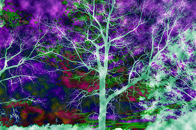 Photograph - Mystic Trees  by Sheila Kay McIntyre