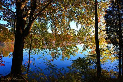 Photograph - Mystical Fall Tree by Sheila Kay McIntyre