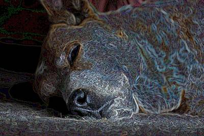 Nap Time Art Print by One Rude Dawg Orcutt