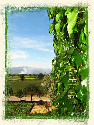 Photograph - Napa Looking Out by Joan  Minchak