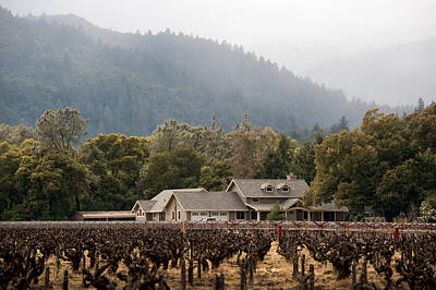 Photograph - Napa Valley Vineyard-4 by Gary Rose