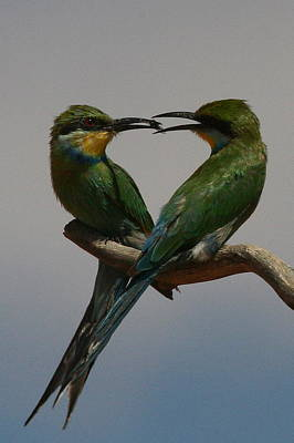 Swallow Photograph - Nature's Heart by Bruce J Robinson