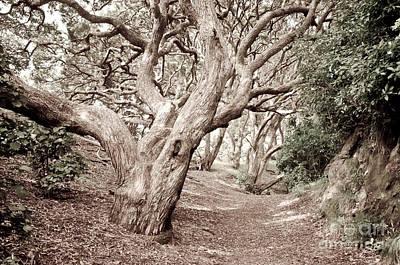 New Zealand Rainfores With Pohutukawa Trees Art Print