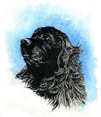 Headstudy Painting - Newfoundland Headstudy by Patrice Clarkson