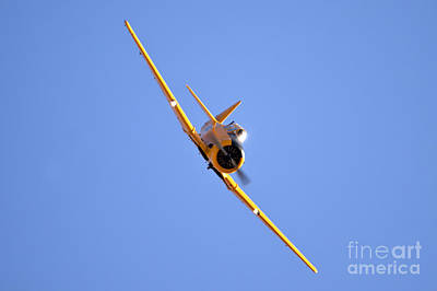 Trainer Aircraft Photograph - North American Aviation T-6 Texan  by Nir Ben-Yosef