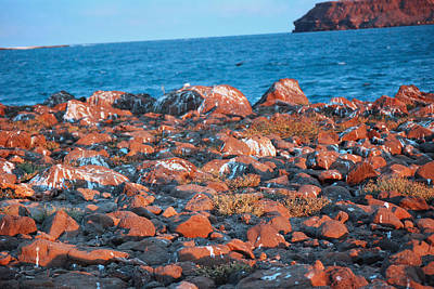 Photograph - North Seymour Island At Sunset  by Harvey Barrison