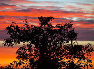 Photograph - October Sky 3 by Michael Canning