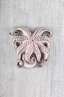 Octopuses Photograph - Octopus by Fausto Favetta Photoghrapher