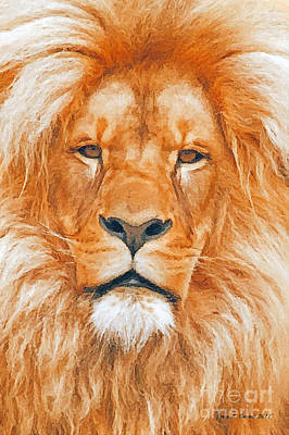 Old Lion Art Print