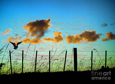 Photograph - On The Fence by Karen Lewis