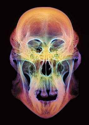 Orangutan Skull Art Print by D. Roberts