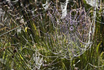 Orb-weaver Spider Webs Art Print