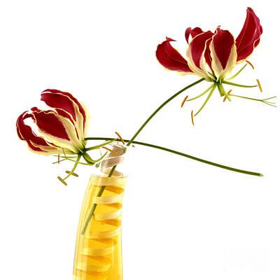 Whorl Photograph - Orchid by Bernard Jaubert