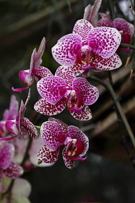 On Trend Breakfast - Orchid Butterfly by Paul Slebodnick