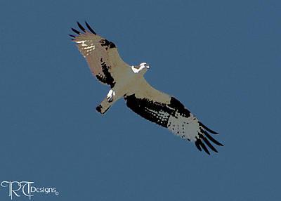 Osprey Mixed Media - Osprey by Rick Thiemke