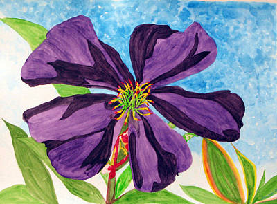 Our Very Bold Tibouchina Art Print