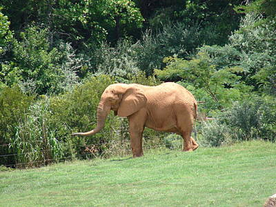 Elephants Photograph - Out Of Africa Series by Renee Cain-Rojo