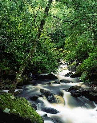 Isi Photograph - Owengarriff River, Killarney National by Richard Cummins