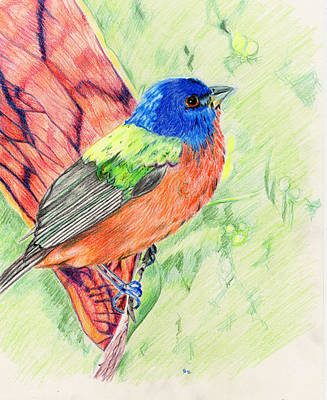 Bunting Drawing - Painted Bunting by Karen Clark