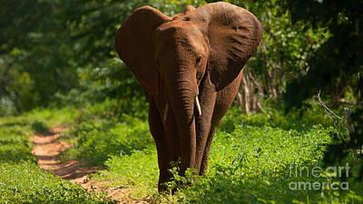 Photograph - Painted Elephant by Mareko Marciniak