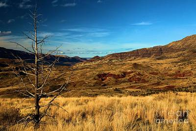 Photograph - Painted Hills Landscape by Adam Jewell
