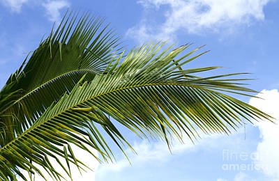 Photograph - Palm  by Blink Images