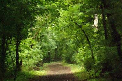 Path To Serenity Art Print by Shellie and Steve Hill