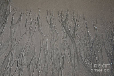 Designs In Nature Photograph - Patterns In Sand by Ted Kinsman