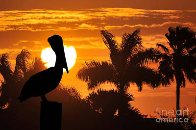 Art Print featuring the photograph Pelican At Sunset by Dan Friend