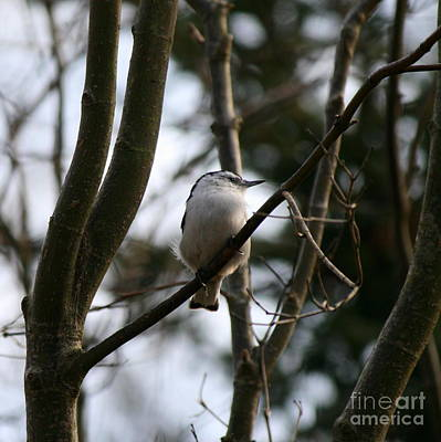 Perched And Content  Art Print by Neal Eslinger