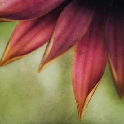 Petals Art Print by Bonnie Bruno