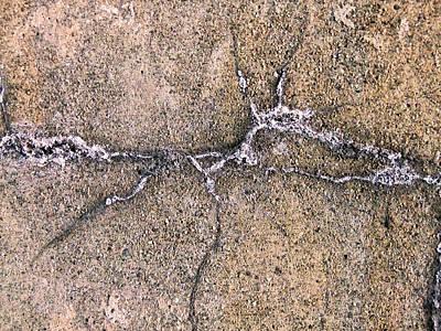 Photograph - Petroglyph by Robert Knight