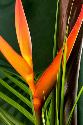Photograph Of A Parrot Flower Heliconia Art Print