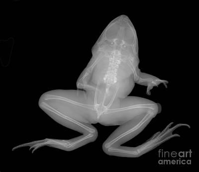 Pickerel Photograph - Pickerel Frog by Ted Kinsman