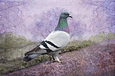 Pigeon In The Park Art Print by Bonnie Barry
