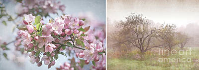 Photograph - Pink Apple Blossoms by Sandra Cunningham
