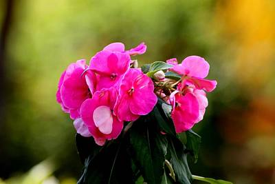 Photograph - Pink  by Elizabeth  Doran