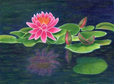 Painting - Pink Lily Of The Pond by Jeanne Kay Juhos