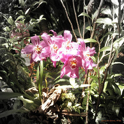 Photograph - Pink Orchids 2 by Gina De Gorna
