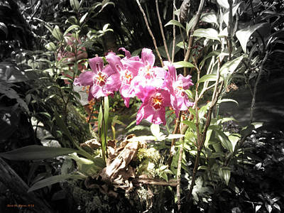 Photograph - Pink Orchids by Gina De Gorna