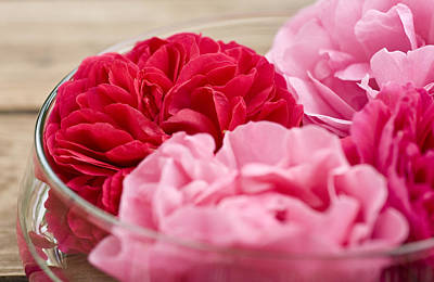 Still Life Photograph - Pink Roses by Frank Tschakert