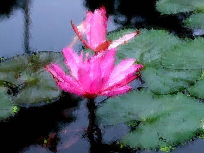 Photograph - Pink Water Lily by Chua  ChinLeng