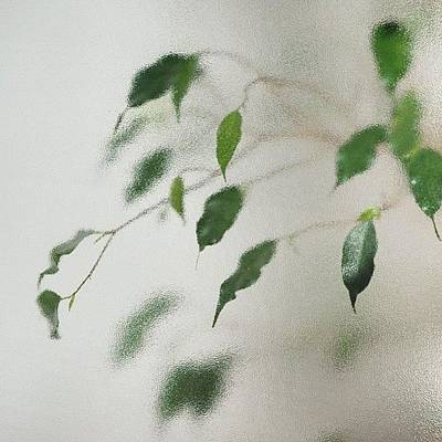 Plant Wall Art - Photograph - Plant Behind Glass by Matthias Hauser