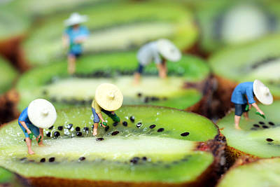 Kiwi Digital Art - Planting Rice On Kiwifruit by Paul Ge