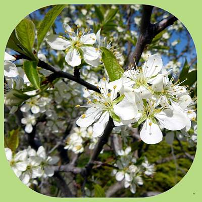 Tina Turner - Plum Blossoms by Will Borden