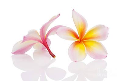 Aloha Photograph - Plumeria Or Leelawadee by Atiketta Sangasaeng