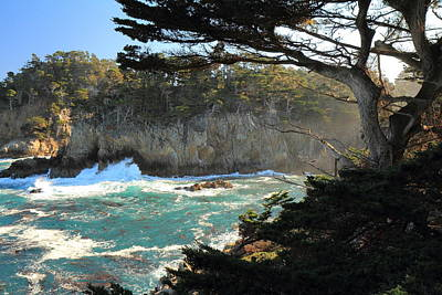 Photograph - Point Lobos Cypress by Scott Rackers