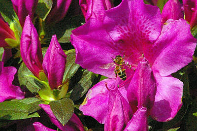 Art Print featuring the photograph Pollinating  by Brian Wright