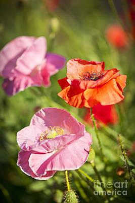 Poppies In A Garden Art Print by Elena Elisseeva